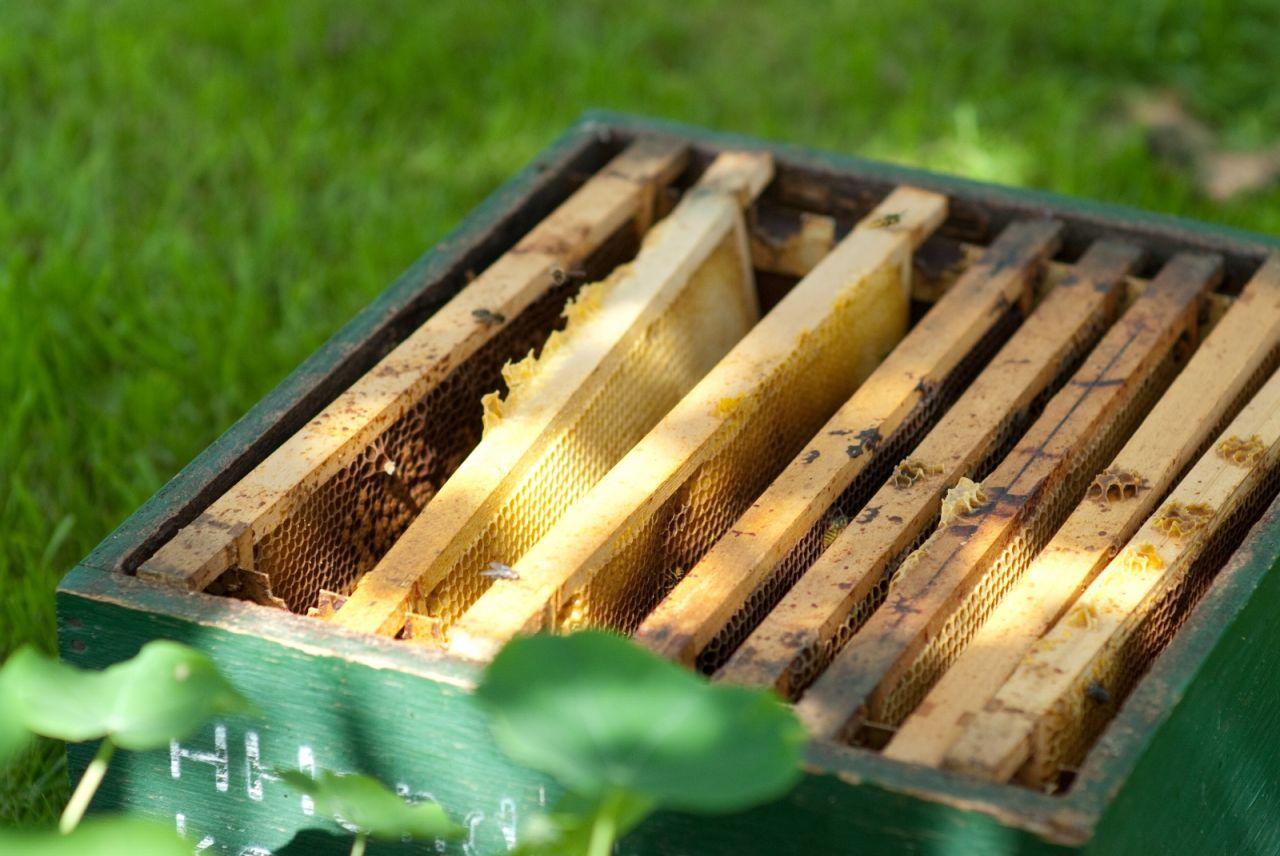 """""""Dat leven van die bijen. Het is een soort kalme gezelligheid"""" Zwolle"""